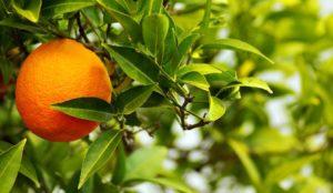 ansia-arancio-amaro