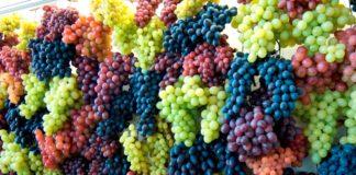 trattamento-viso-mosto-uva