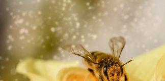 trattamento-viso-veleno-api
