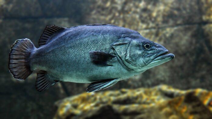 olio-di-pesce-omega-3