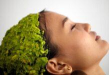 Maschera capelli avocado