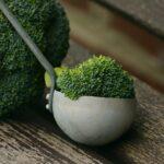 broccolo-proprieta-benefici