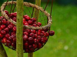 frutti-rossi-quali-sono-benefici