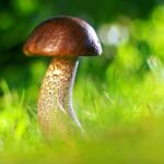 funghi-benefici-proprieta-valori nutrizionali