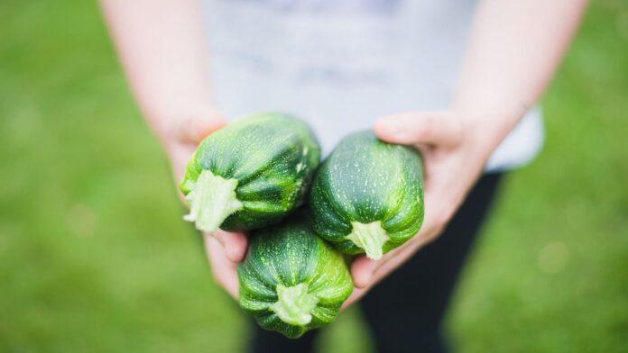zucchina-proprietà-benefici-valori nutrizionali