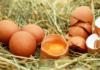fabbisogno proteico giornaliero