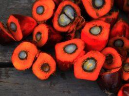 olio-di-palma-